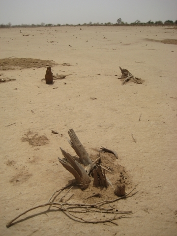 Man made desert in West Africa