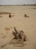 Man made desert in West Africa